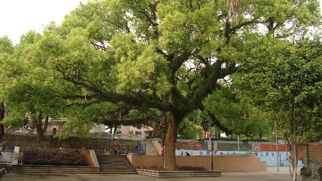 温陵/公園紀念亭、花圃、蓮花池與1940年建造的抗日陣亡將士紀念碑,...
