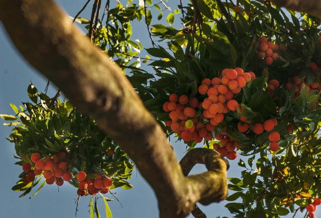 荔枝季节吃荔枝上火怎么办??